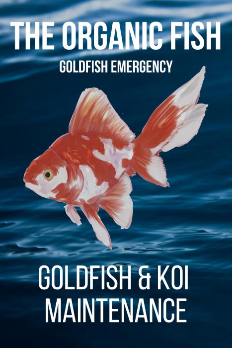 Goldfish Koi Maintenance